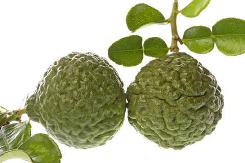 kaffir lime asian citrus fruit tree 5 gallon - Kaffir Lime Tree